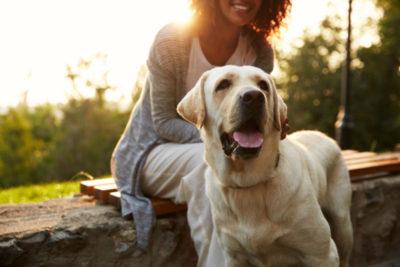 ふやかしフードは療養中やシニア犬の食事としても役立つ